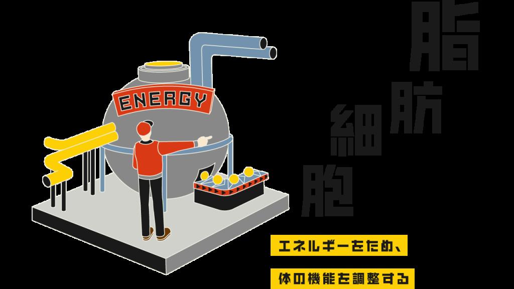 エネルギーをため、体の機能を調整する